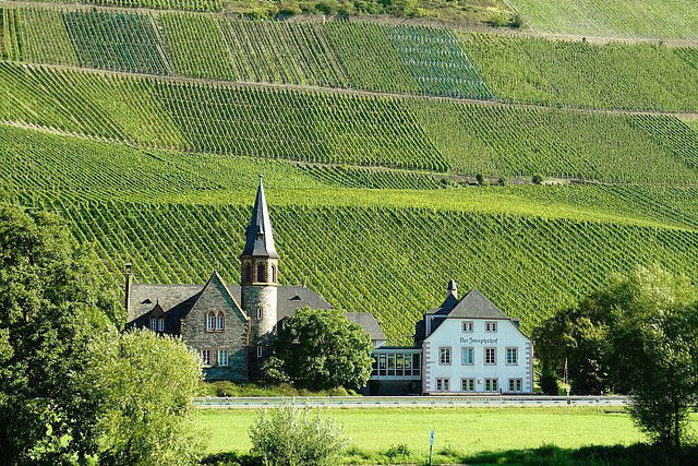 vineyards mosel 1