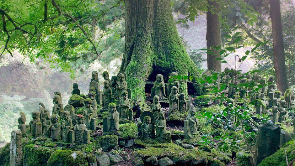 Japan von oben -  Land der Götter | (C) ARTE